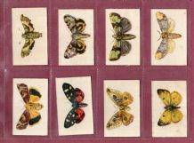 Cigarette cards set  Butterflies & Moths SILKS 1924 set of 12  Mint